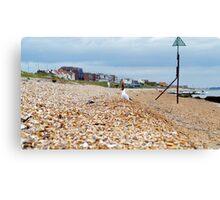 Seagull Beachfront Views Canvas Print