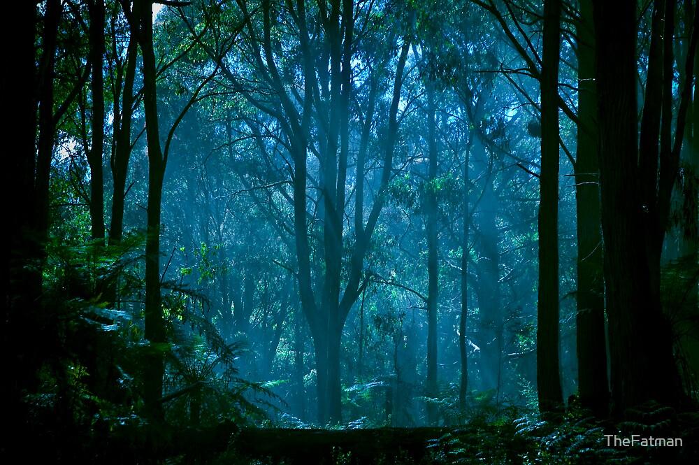 Beauty through the haze by Adrian Jeffs