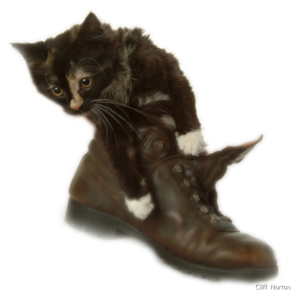 Cat in a boot by Cliff  Norton