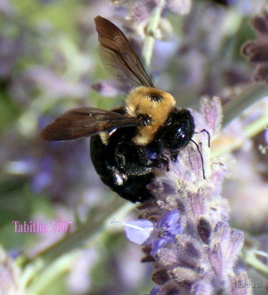 Sweet Nectar by Tabitha B