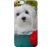 Snowdrop the Maltese in a Bucket iPhone Case/Skin