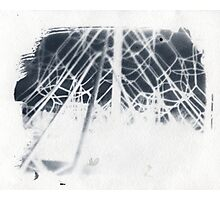 cyanotype web Photographic Print