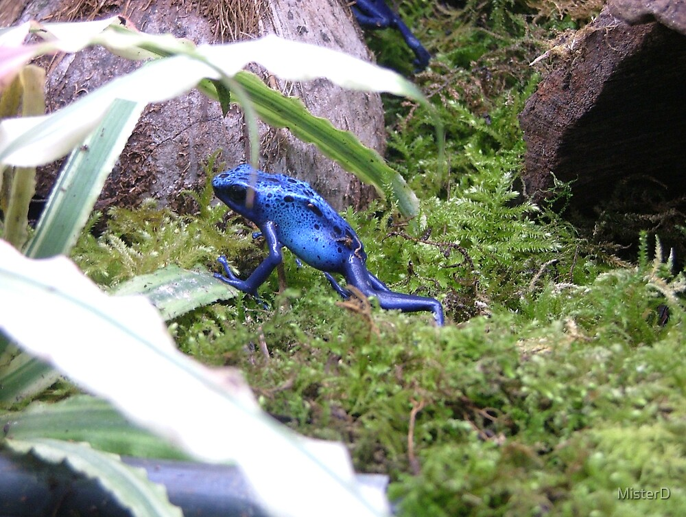Blue Frog by MisterD