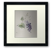 A great red grape Gamay Framed Print