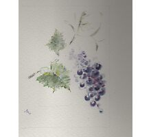 A great red grape Gamay Photographic Print