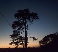 Pine by RuthLuckhurst