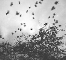 Crows by schnappischnap