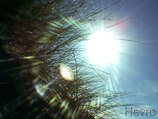 sunlight by HevroEgan
