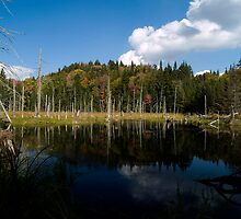 The beaver pond by BrigitteC