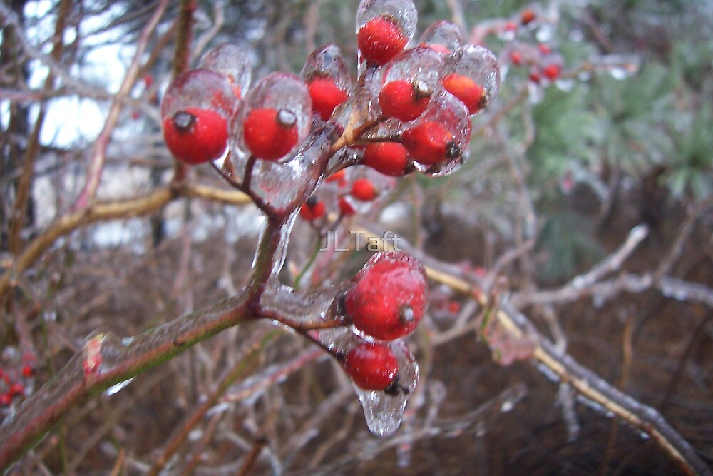 Winter Berries by JLTaft