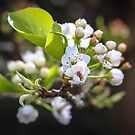 Spring Cluster by Astrid Ewing Photography