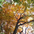 The Canopy by forestphotos