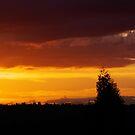 Oregon by Kimberly Adams