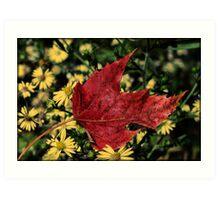 Red Fall Leaf Art Print