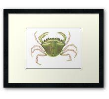 """Shore crab"" Framed Print"