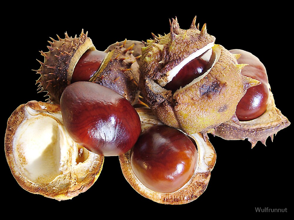 Conkers Too by Wulfrunnut
