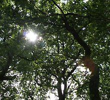 Tree canopy by aliboy00