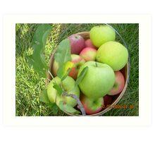 Picked Apples Art Print