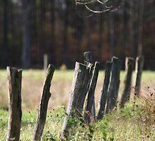 fence by cheltara