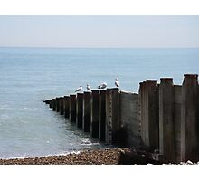 Seagulls at Eastbourne Photographic Print