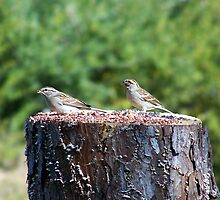 stump for two by tomcat2170