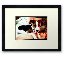 A doggy friend Framed Print