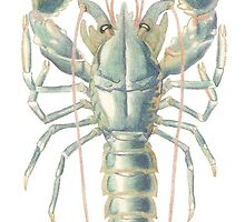 """""""Lobster"""" (vertical) by TheLollygagger"""