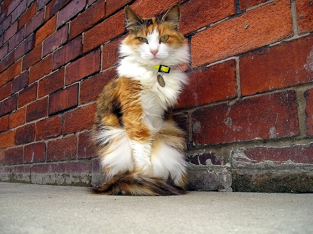 Fluffy the 3 legged cat by TE4SE