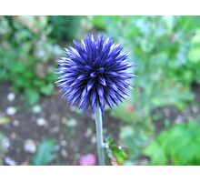 Blue Spike Photographic Print