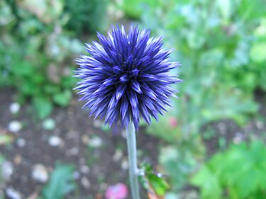 Blue Spike by Sharon Perrett