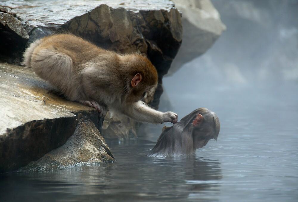 Monkey Day Spa by Robert Mullner