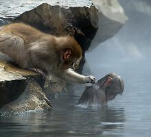 Monkey Day Spa by Robert Mullner