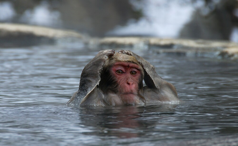 Monkey Day Spa ~ Hair Washing Session by Robert Mullner
