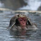 Monkey Day Spa ~ Hair Washing Session by Robert Mullner