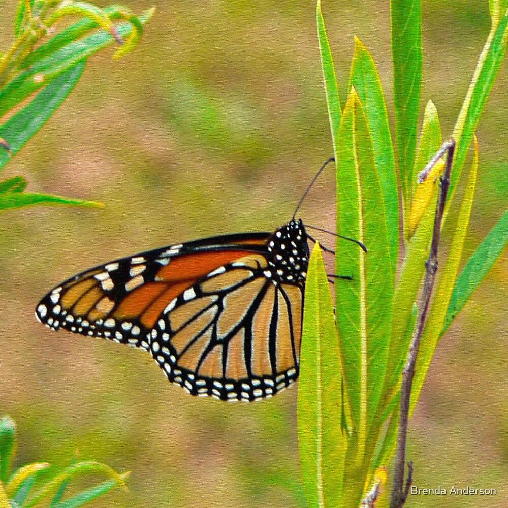 Monarch by Brenda Anderson