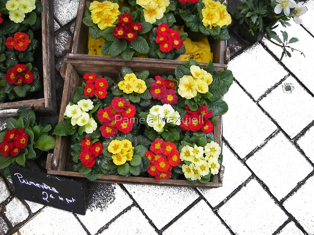 Flower Box by Pamela Maxwell