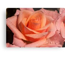 My Birthday Rose Metal Print