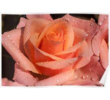 My Birthday Rose Poster