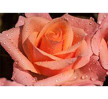 My Birthday Rose Photographic Print