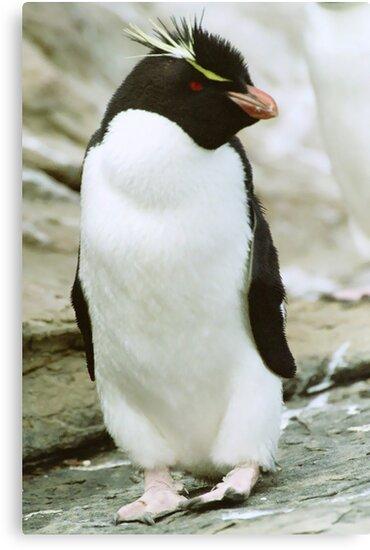 Rockhopper Penguin by Steve Bulford