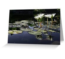 Lilypond Greeting Card