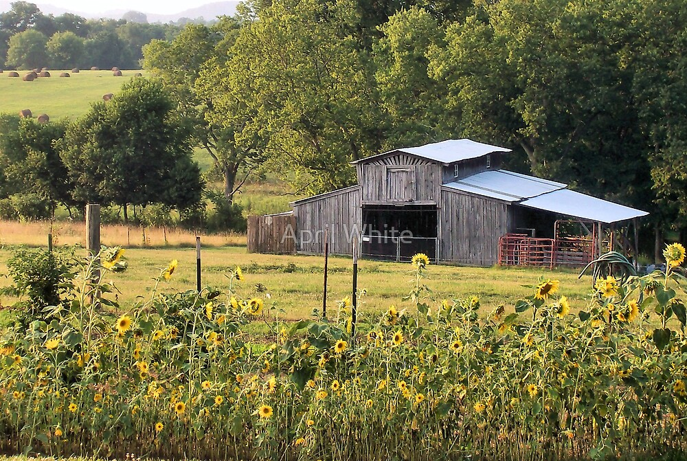 Barn with Sunflower Foreground by xPressiveImages