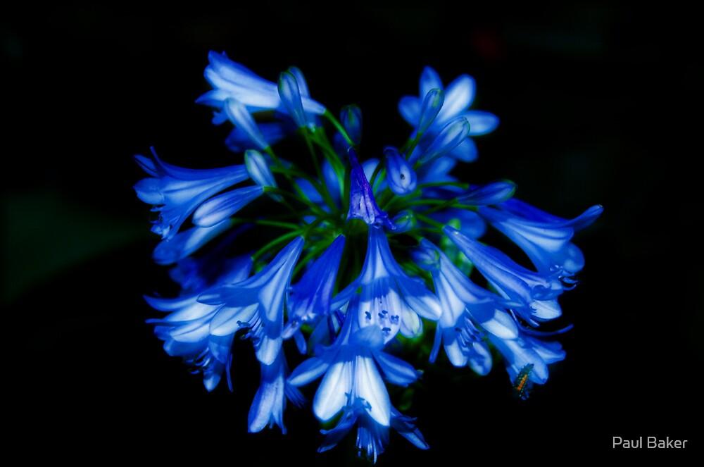 Bloomin' Blue by Paul Baker