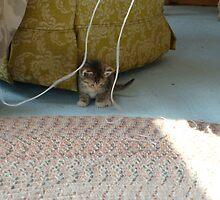 Playing With Yarn by flwr109