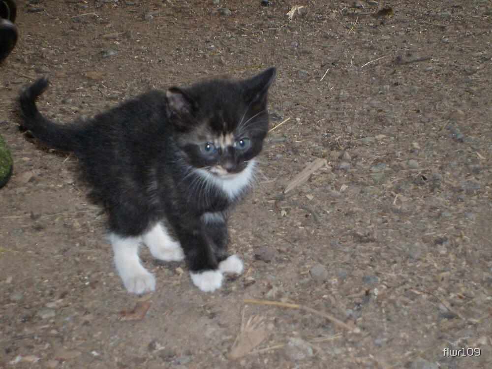 Cute Kitty by flwr109