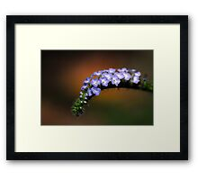 Splendor in the Grass and Glory in the Flower Framed Print