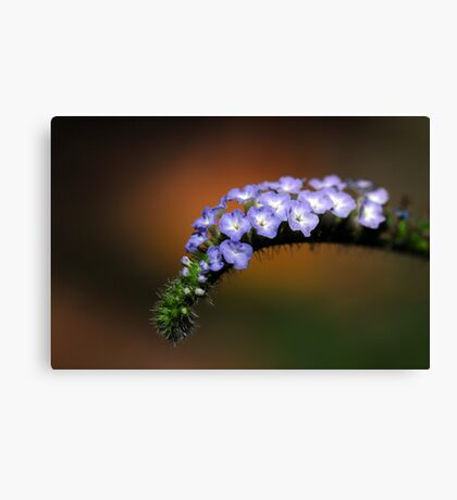 Splendor in the Grass and Glory in the Flower Canvas Print