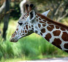 Pondering Giraffe by Paul Baker