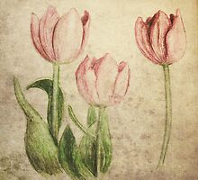 Tulips by Dominika Aniola