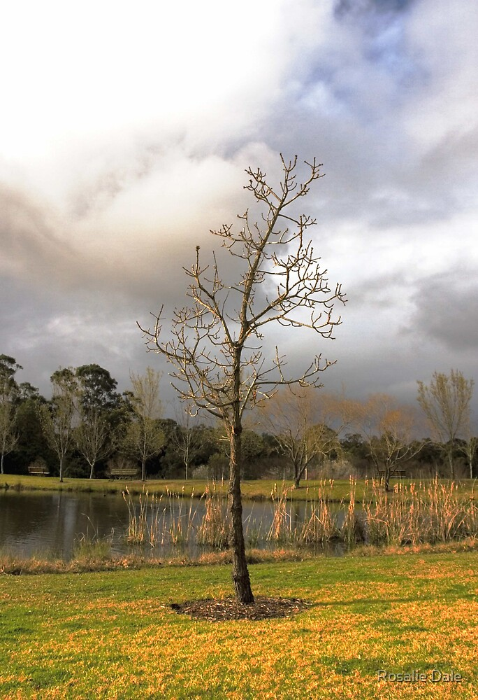 Winter treescape by Rosalie Dale